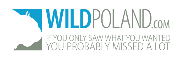 wildpoland-logo-big-02